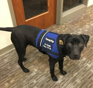 Bear, Therapy Dog in Training